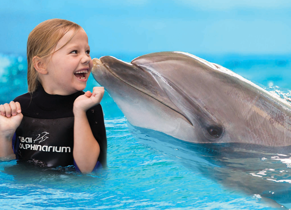 swim-with-dolphins-with-the-girl.png