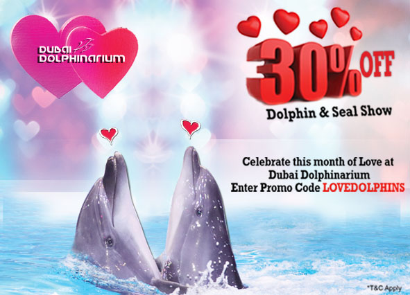 dolphins-promotion-on-february.jpg