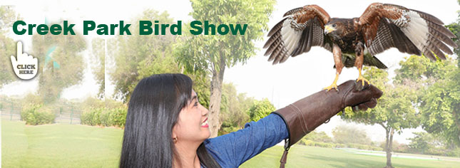 bird show in Dubai