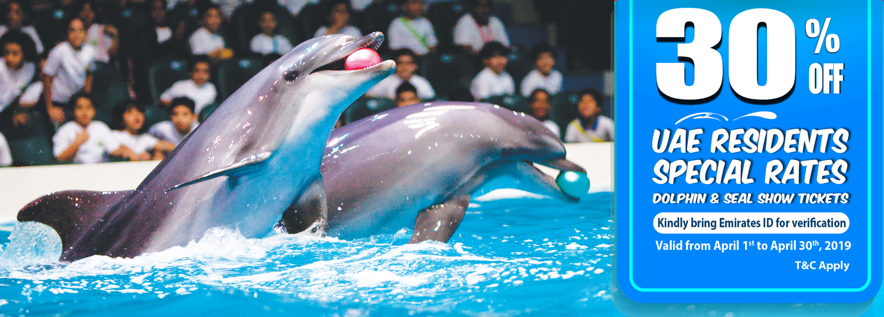dolphin show uae residents