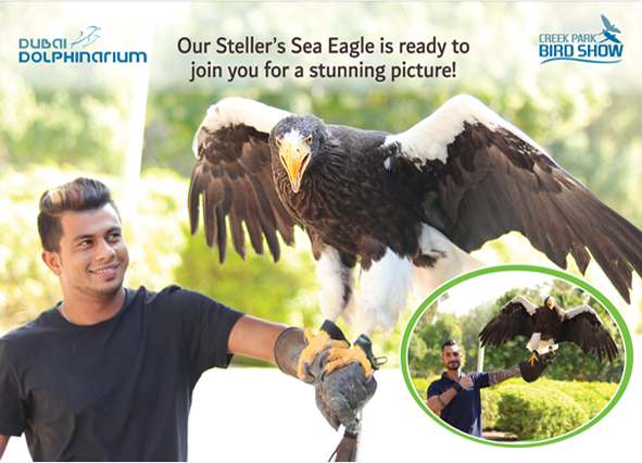 picture with the steller's sea eagle in Dubai