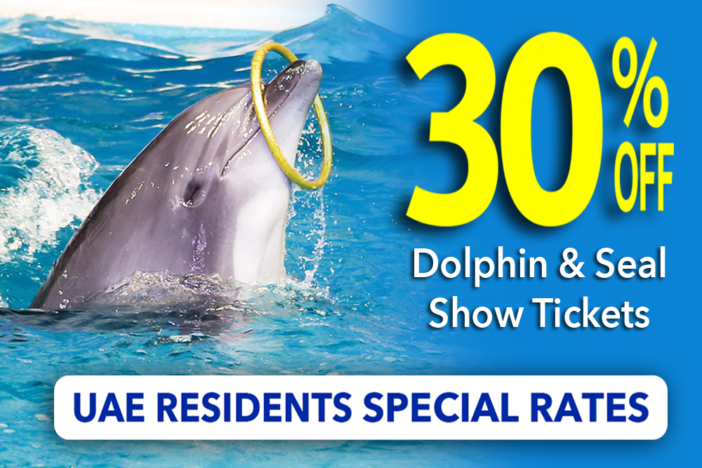 dolphin show offers