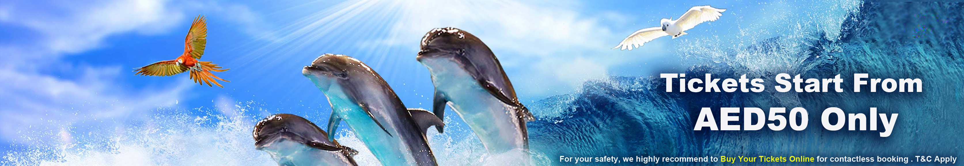 offers in dolphin and seal show in DUBAI - UAE's Only Dolphin Show Best Offers in 2021